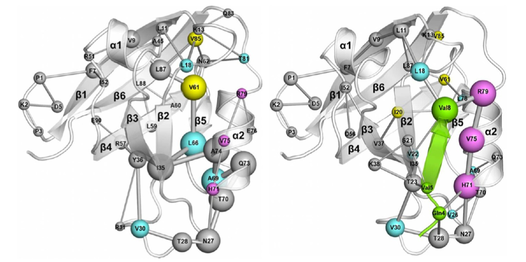 A Mixed Protein Structure Network and Elastic Network Model Approach to Predict the Structural Communication in Biomolecular Systems: The PDZ2 Domain from Tyrosine Phosphatase 1E As a Case Study