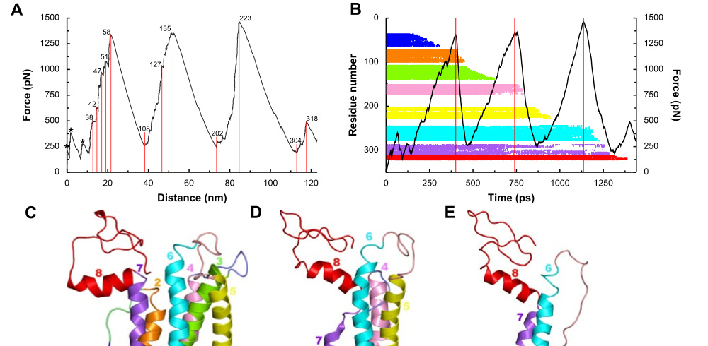 Structural insights into retinitis pigmentosa from unfolding simulations of rhodopsin mutants